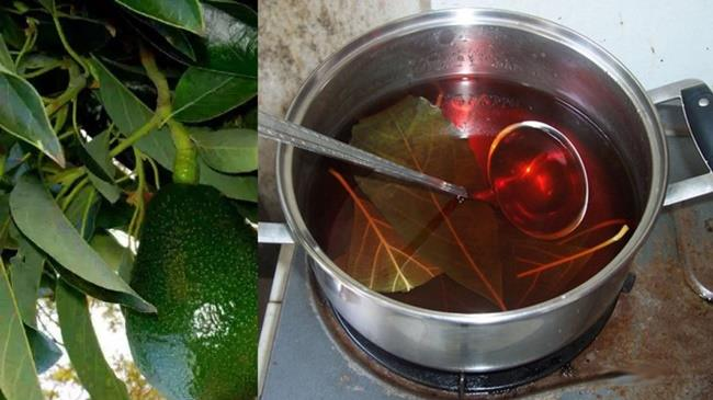 proprietà semi di avocado per perdere peso